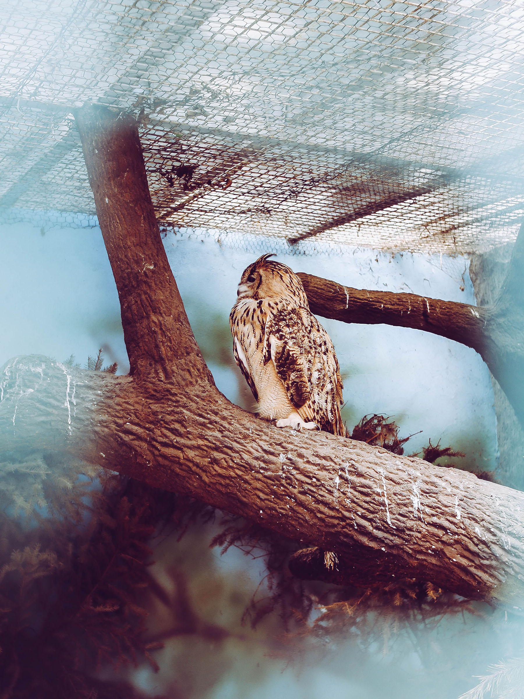 Caged brown owl
