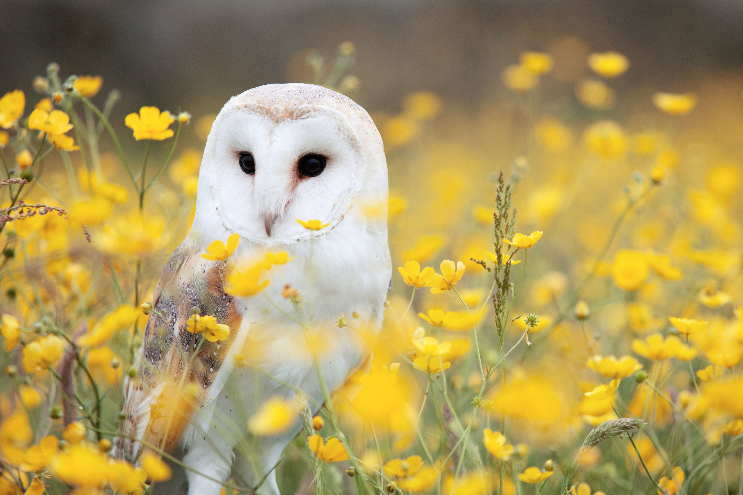 White owl in flowers